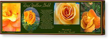 Rose Yellow Gold Plus Canvas Print