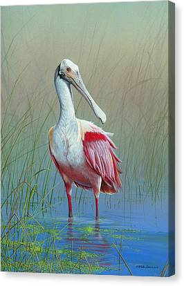 Roseate Spoonbill Canvas Print by Mike Brown