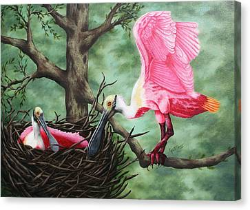 Roseate Spoonbill Nesters  Canvas Print