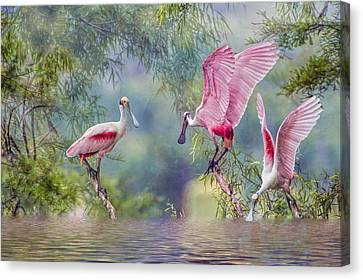 Spoonbill Canvas Print - Roseate Spoonbill Trio by Bonnie Barry