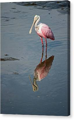 Waterscape Canvas Print - Roseate Spoonbill Vi by Suzanne Gaff