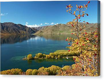 Willow Lake Canvas Print - Rosehip Berries And Sailors Cutting by David Wall