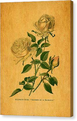 Roses Are Golden Canvas Print by Sarah Vernon