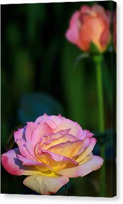 Roses Canvas Print by Deborah  Crew-Johnson