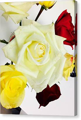 Roses Canvas Print by Felix Zapata