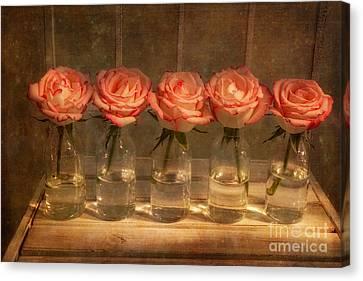 Roses In A Row Canvas Print by Ann Garrett