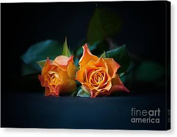 Roses Canvas Print by Jaroslaw Oleksyk