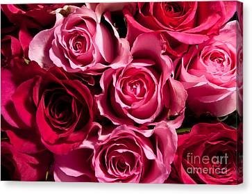 Canvas Print featuring the photograph Roses by Matt Malloy