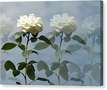 Roses Roses And More Roses Canvas Print by Rosalie Scanlon