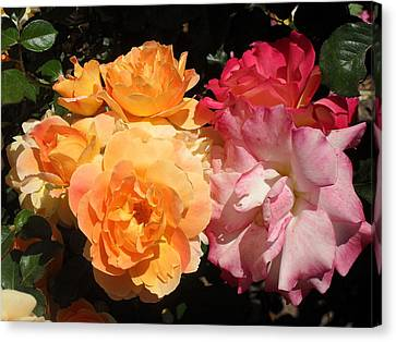 Roses Roses Roses Canvas Print by Mark Barclay