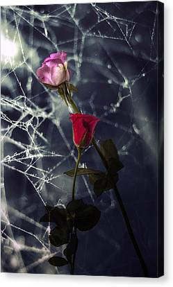 Roses With Coweb Canvas Print