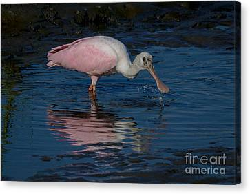 South Carolina State Bird Canvas Print - Rosetta Spoonbill by Matthew Trudeau