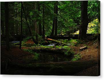 Ross Creek Montana Canvas Print by Jeff Swan