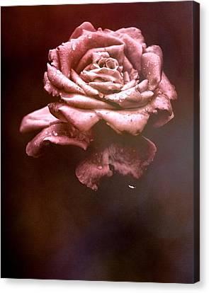 Rosy Fog Canvas Print