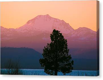 Rosy Lassen Canvas Print by Jan Davies