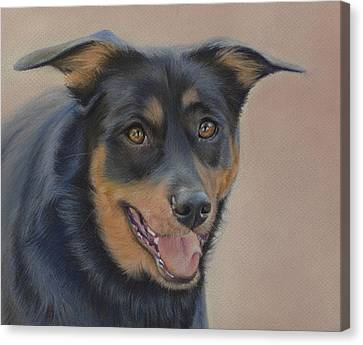 Canvas Print featuring the painting Rottweiler - Drawing by Natasha Denger
