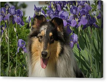 Scottish Dog Canvas Print - Rough Collie By Iris Flower Bed by Vintage Images