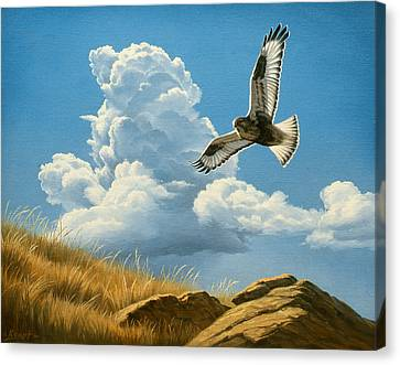 Rough-legged Hawk Canvas Print