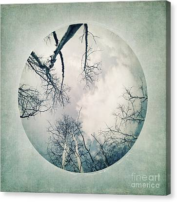 round treetops I Canvas Print
