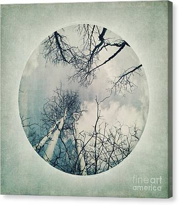 round treetops II Canvas Print