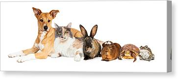 Row Of Domestic Pets Canvas Print by Susan Schmitz