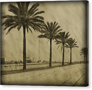 Bokhe Canvas Print - Row Of Palms by Malania Hammer