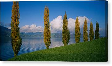 Row Of Poplar Trees Along A Lake, Lake Canvas Print by Panoramic Images