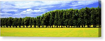 Row Of Trees, Uppland, Sweden Canvas Print by Panoramic Images
