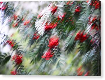 Rowan Tree Under The Silver Rain. Impressionism Canvas Print