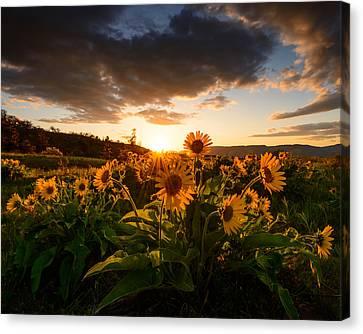 Rowena Crest Sunset Canvas Print by Dan Mihai