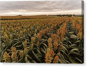 Canvas Print featuring the photograph Rows Of Color by Scott Bean