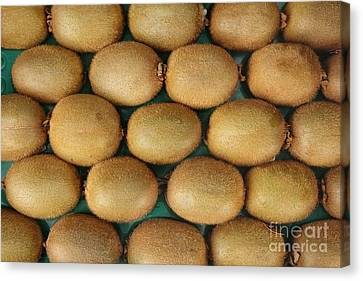 Rows Of Fresh Kiwifruits Canvas Print by Yali Shi