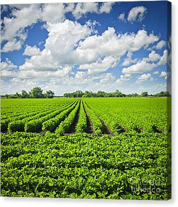 Rows Of Soy Plants In Field Canvas Print by Elena Elisseeva