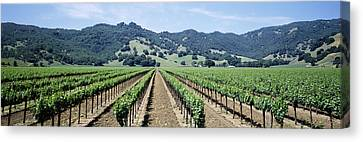 Rows Of Vine In A Vineyard, Hopland Canvas Print by Panoramic Images
