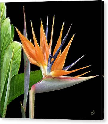 Crane Canvas Print - Royal Beauty I - Bird Of Paradise by Ben and Raisa Gertsberg