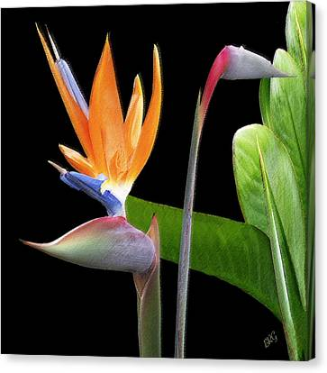 Royal Beauty II - Bird Of Paradise Canvas Print
