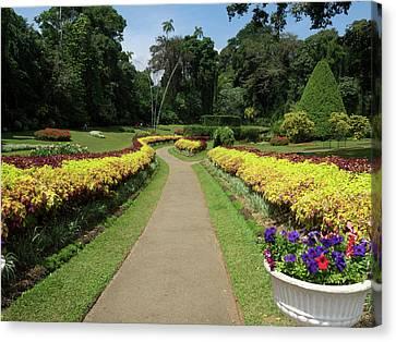Royal Botanical Gardens, Peradeniya Canvas Print