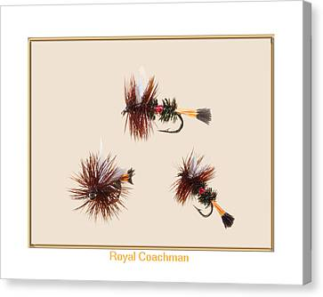 Royal Coachman II Canvas Print by Neal Blizzard