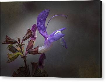 Canvas Print featuring the photograph Royal by Jacqui Boonstra