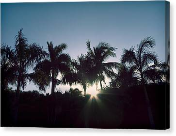 Royal Palm Sunset Canvas Print