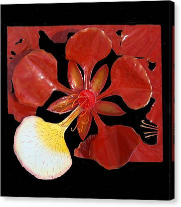 Royal Poinciana Bloom Set In A Bed Of Petals Canvas Print