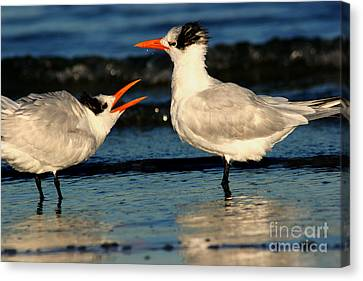 Canvas Print featuring the photograph Royal Tern Courtship Dance by John F Tsumas