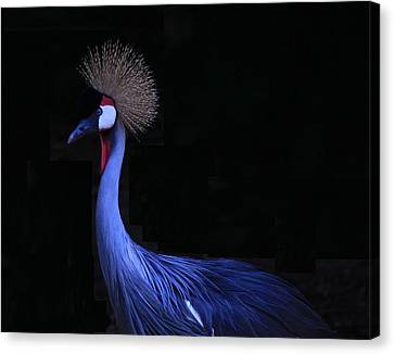 Animal 6 Canvas Print