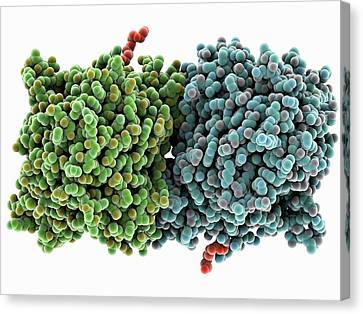 Rpe65 Retinal Pigment Protein Canvas Print by Laguna Design