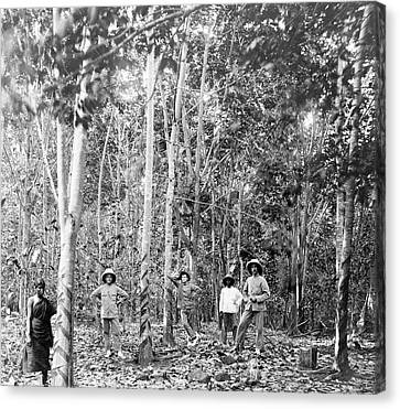 Rubber Tree Plantation Canvas Print by Library Of Congress