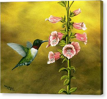 Ruby Throated Hummingbird And Foxglove Canvas Print