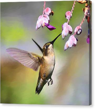 Ruby-throated Hummingbird - Digital Art Canvas Print