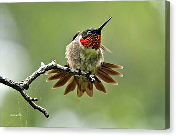 Ruby-throated Velocity Canvas Print by Christina Rollo