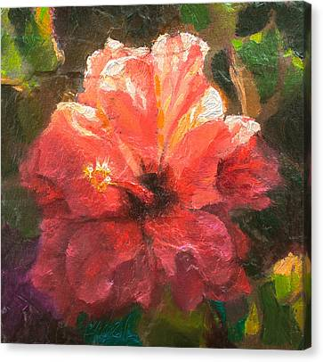 Ruffled Light Double Hibiscus Flower Canvas Print by Karen Whitworth