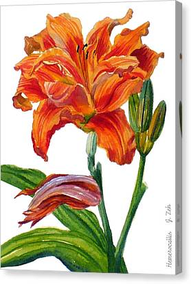 Ruffled Orange Daylily - Hemerocallis Canvas Print